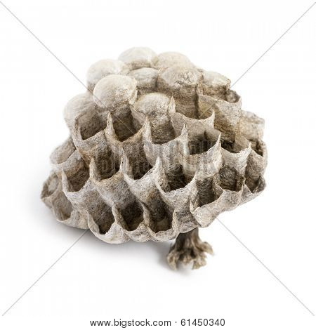 Dry vespiary, isolated on white
