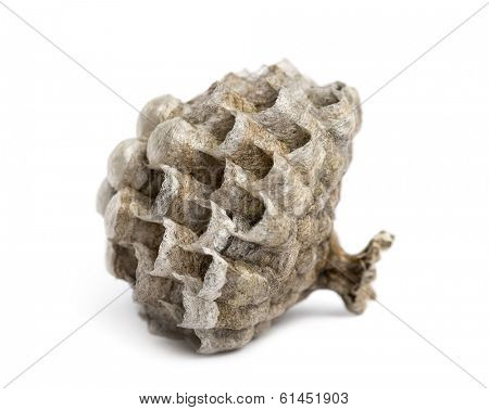 Side view of a dry vespiary, isolated on white