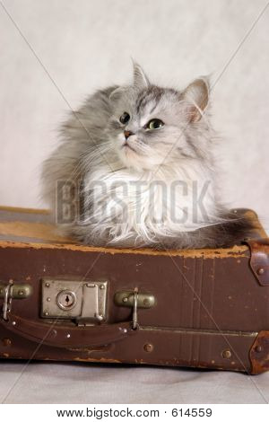 Cat On A Suitcase - 2