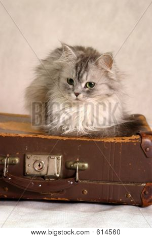 Cat On A Suitcase - 1