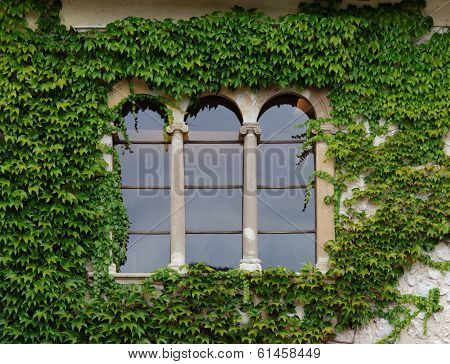 Castle window with ivy in Slovenia