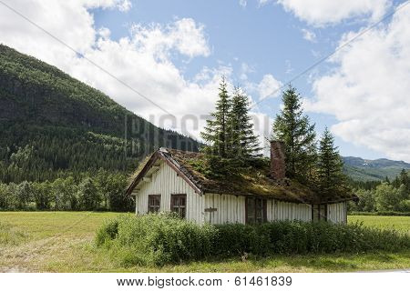 Old House With Spruces