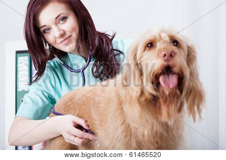 Female Vet During Check-up