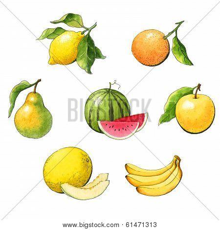 Set Of Watercolor Fruit