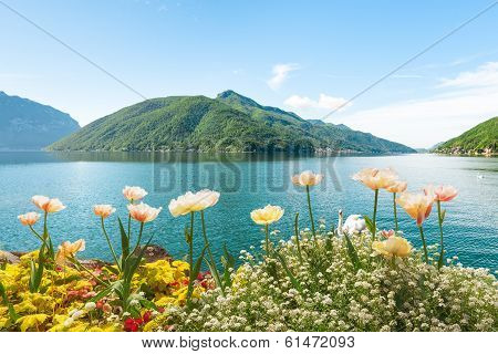 Flowers Near Lake With Swans, Lugano, Switzerland