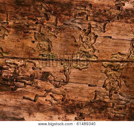 Old Wood Texture Damaged By Bark Beetle, Aged Wooden Board Background