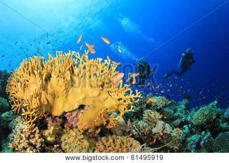 Scuba Diving on coral reef with fish underwater