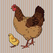 stock photo of baby chick  - Vector illustration of realistic broody chicken and baby chick - JPG