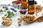 stock photo of chamomile  - dried herbs and essential oils on science sheet - JPG