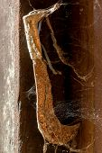 pic of cobweb  - an old abandoned rusty hatchet with cobwebs - JPG