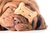 pic of dogue de bordeaux  - dog with a bone  - JPG