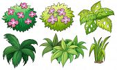 foto of six-petaled  - Illustration of the six ornamental plants on a white background - JPG