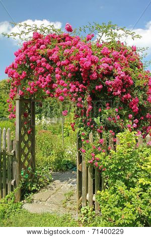 Red Rambler Rose On An Arched Garden Entrance
