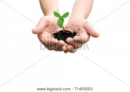 Hands with small pea plant with space for text