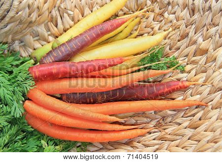 Bunch Of Carrots, Tricolor, On A Wicker Basket