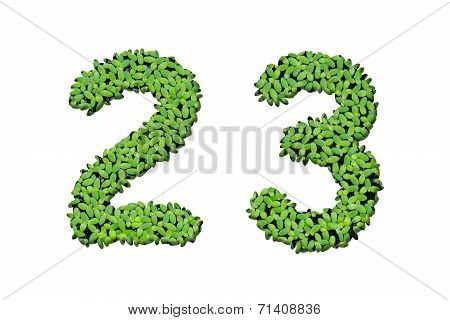 Duckweed Alphabet Letters - Number 2, 3 Isolated On White Background
