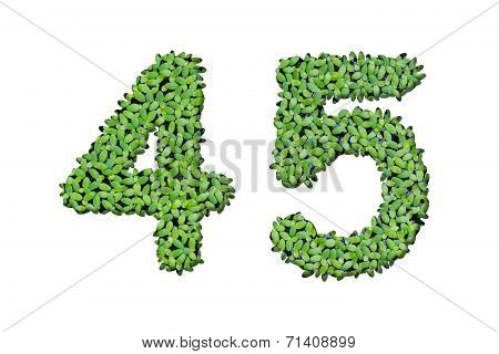 Duckweed Alphabet Letters - Number 4, 5 Isolated On White Background