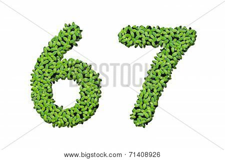 Duckweed Alphabet Letters - Number 6, 7 Isolated On White Background