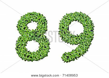 Duckweed Alphabet Letters - Number 8, 9 Isolated On White Background