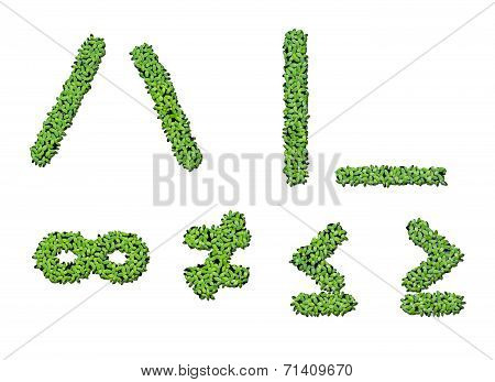Collection Of Alphabet Letter Symbols From Duckweed Isolated On White Background