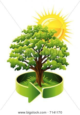 Roble árbol verde como símbolo de la ecología