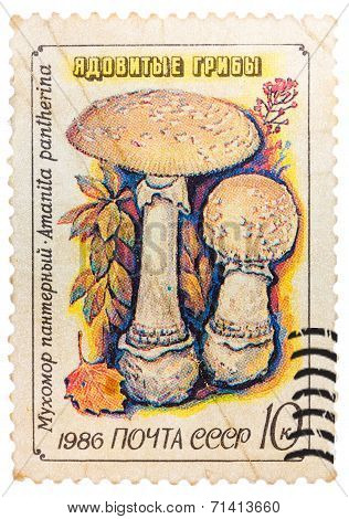 Post Stamp Printed In Ussr (cccp, Soviet Union) Shows Poisonous Panther Cap Mushroom Or False Blushe