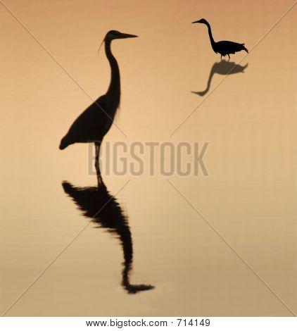 Herons Silouette