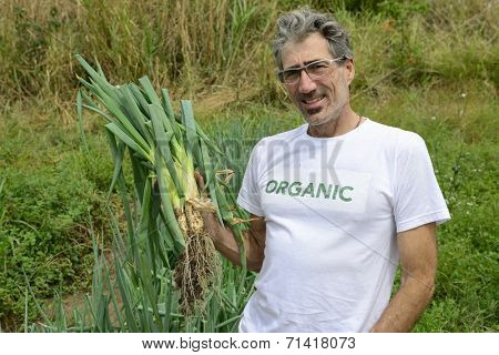 Organic farmer harvesting green onion