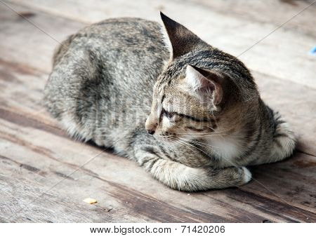 Close Up Side Face Of Stray Cat