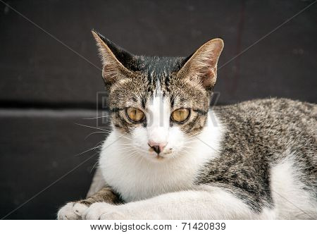 Close Up Looking Face Of Stray Cat In Portrait