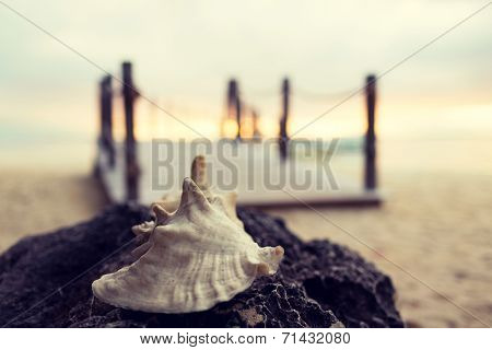 beach, summer, seashell and leisure concept - close up of seashell on tropical beach
