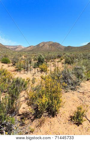 Savanna Forest Landscape And Blue Sky In Cape Town, South Africa.