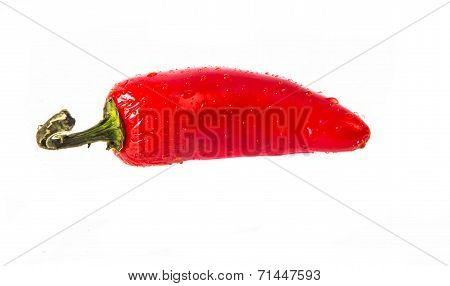 wet RED jalapeno hot pepper