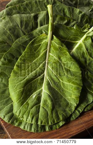 Raw Organic Green Collard Greens