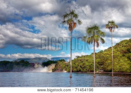 Three Palm Trees In The Middle Of The Lake In Canaima Park With Hills, Tepui And Waterfall On The Ba