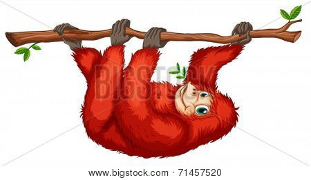 Illustration of a red orangutan on a white background