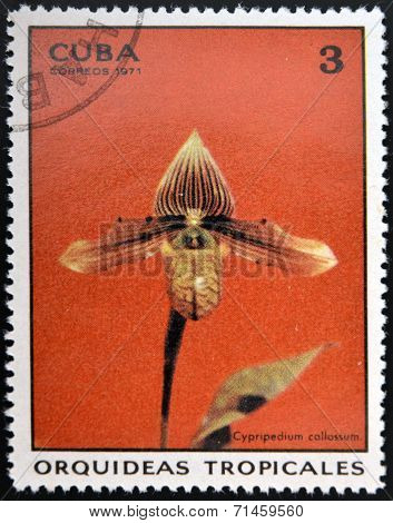 CUBA - CIRCA 1971: A stamp printed in Cuba dedicated to tropical orchids shows cypripedium callosum