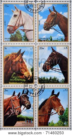 EMIRATE OF SHARJAH - CIRCA 1972: stamps printed in Emirate of Sharjah shows image of The horse