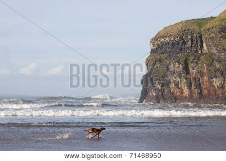 Blur Motion Of Dog Running By Cliffs