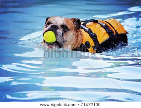 a cute dog at a local public pool