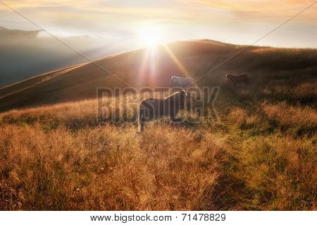 Sunset In Mountains Nature Background. Horses Silhouette At Haze And Sunbeams On Summer Meadow