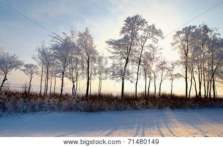 Forest With Deciduous Trees In Winter Landscape