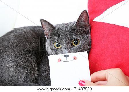 Grey cat on sofa closeup
