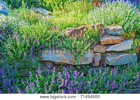 Rockery Garden Closeup
