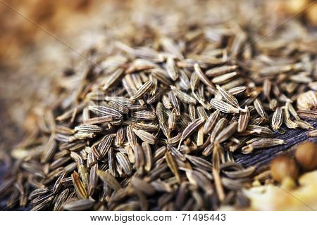 Fennel Seeds Closeup