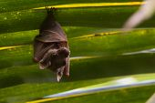 pic of bat wings  - Peter - JPG