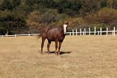 image of colt  - Portrait Picture of Large Strong Brown Colt Horse - JPG