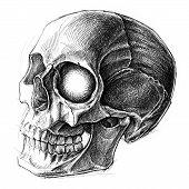 stock photo of cross-hatch  - Skull traditional ballpoint pen drawing - JPG