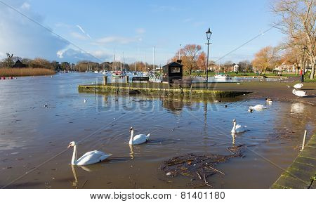 Christchurch Dorset England UK swans on the river relaxed calm day