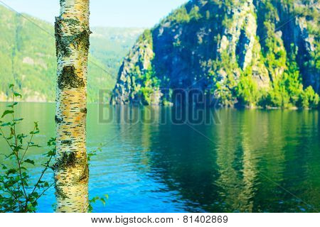 Birich Tree Mountains And Fjord Scenery